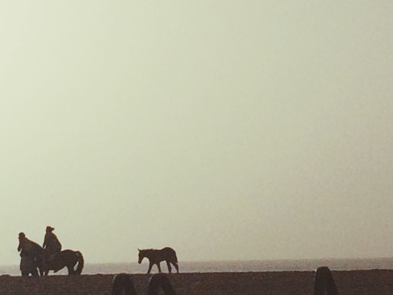 copy space, animal themes, mammal, nature, outdoors, one animal, standing, full length, day, domestic animals, sky, people