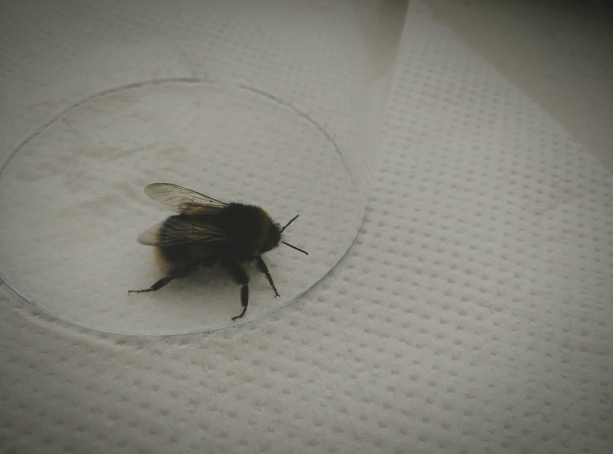 Nature Wildlife Fly Unexpected Visitor FlyHigh Lostanimal Bugslife Scotland