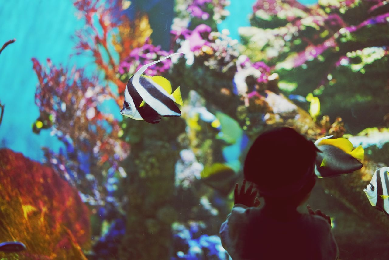 Multi Colored People Day Outdoors Close-up UnderSea Sea Blue Animals In Captivity Animal Wildlife Scuba Diving Water Animals In The Wild Aquarium Underwater Fish Vacations Swimming Pool Silhouette