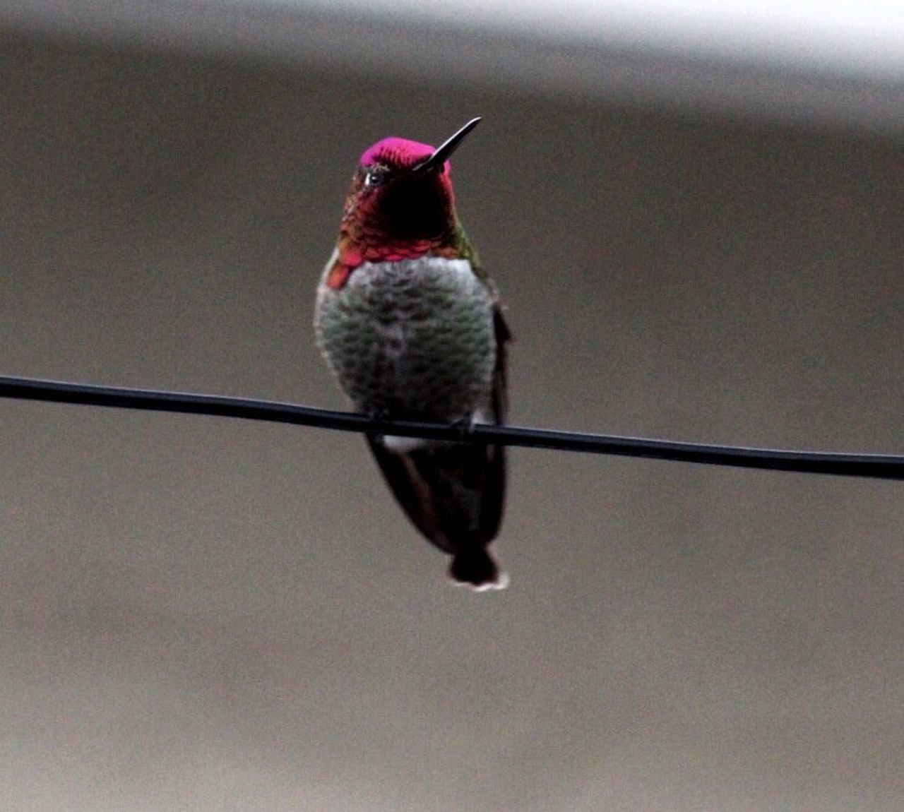 Hummingbird One Animal Animal Themes Bird Animals In The Wild Perching Focus On Foreground Animal Wildlife No People Hummingbird Low Angle View Day Close-up Nature Outdoors