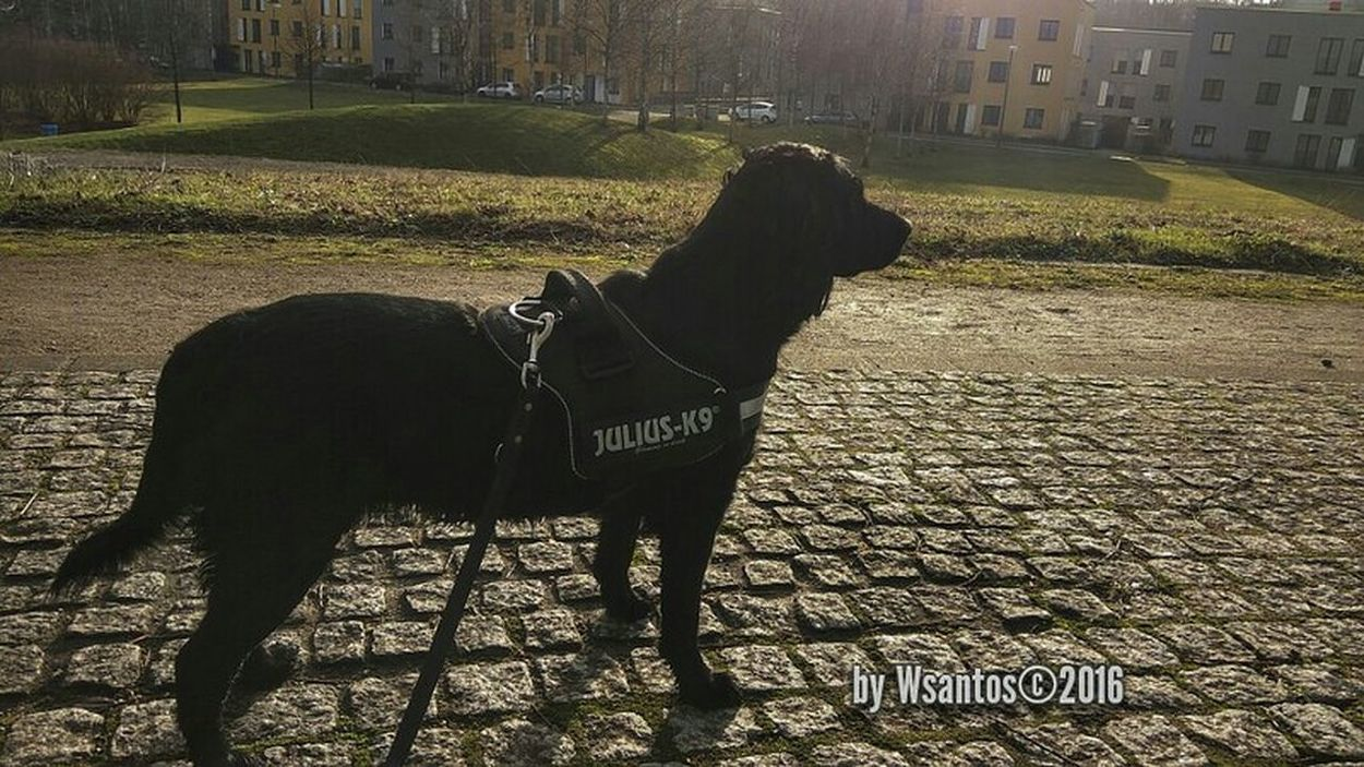 Pets Hello World First Eyeem Photo GERMANY🇩🇪DEUTSCHERLAND@