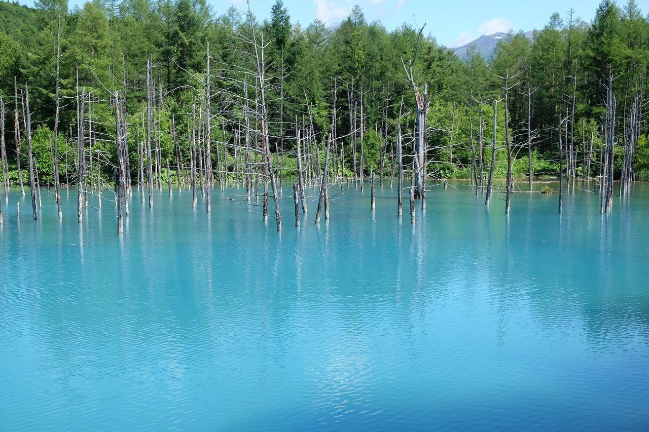青い池 Beauty In Nature Japan