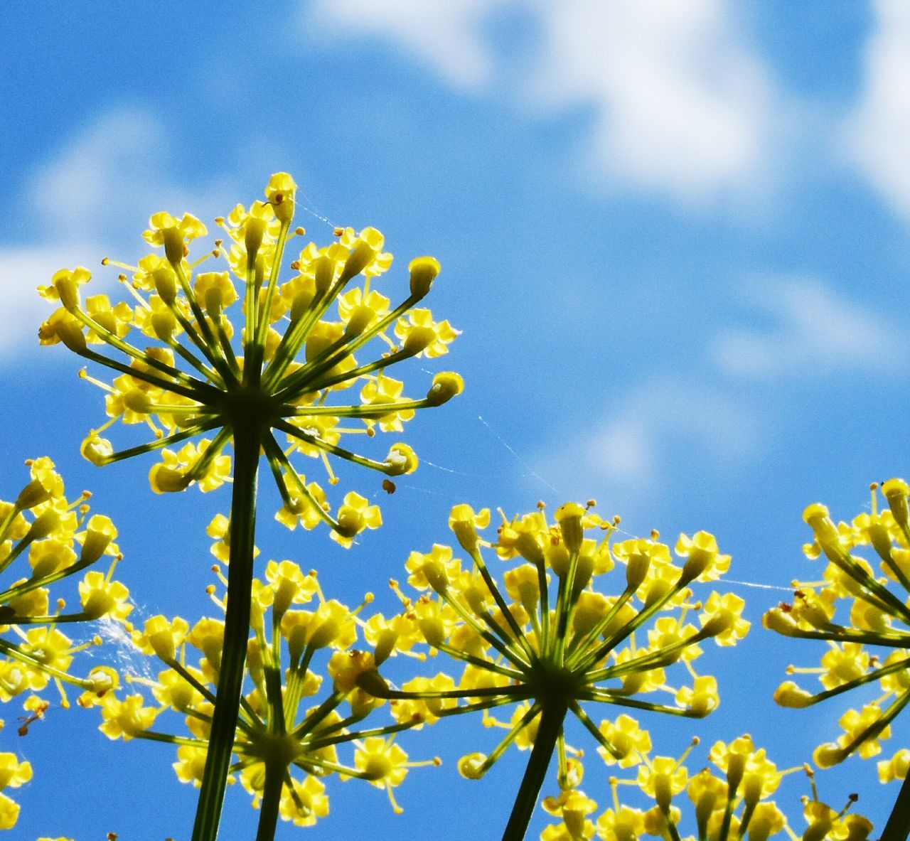 Beautiful stock photos of spinnen, Yellow, beauty In Nature, bloom, blooming