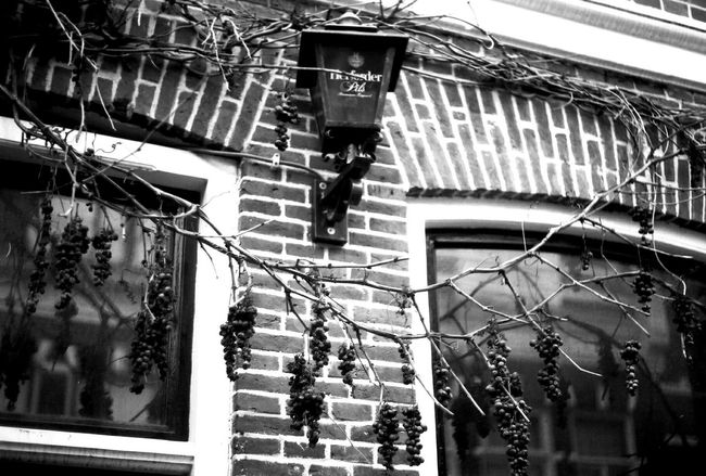 Yashicafx3super2000 Filmphotography Blackandwhite Ilforddelta100 Holland Grapes