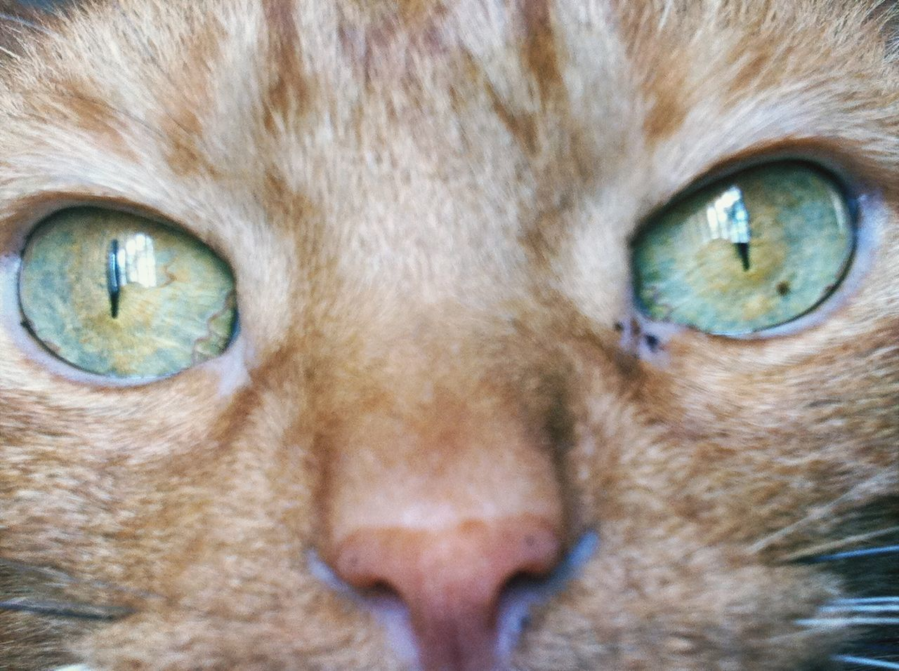 domestic cat, pets, one animal, feline, domestic animals, animal themes, mammal, portrait, looking at camera, cat, animal head, close-up, full frame, no people, whisker, yellow eyes, backgrounds, ginger cat, indoors, day