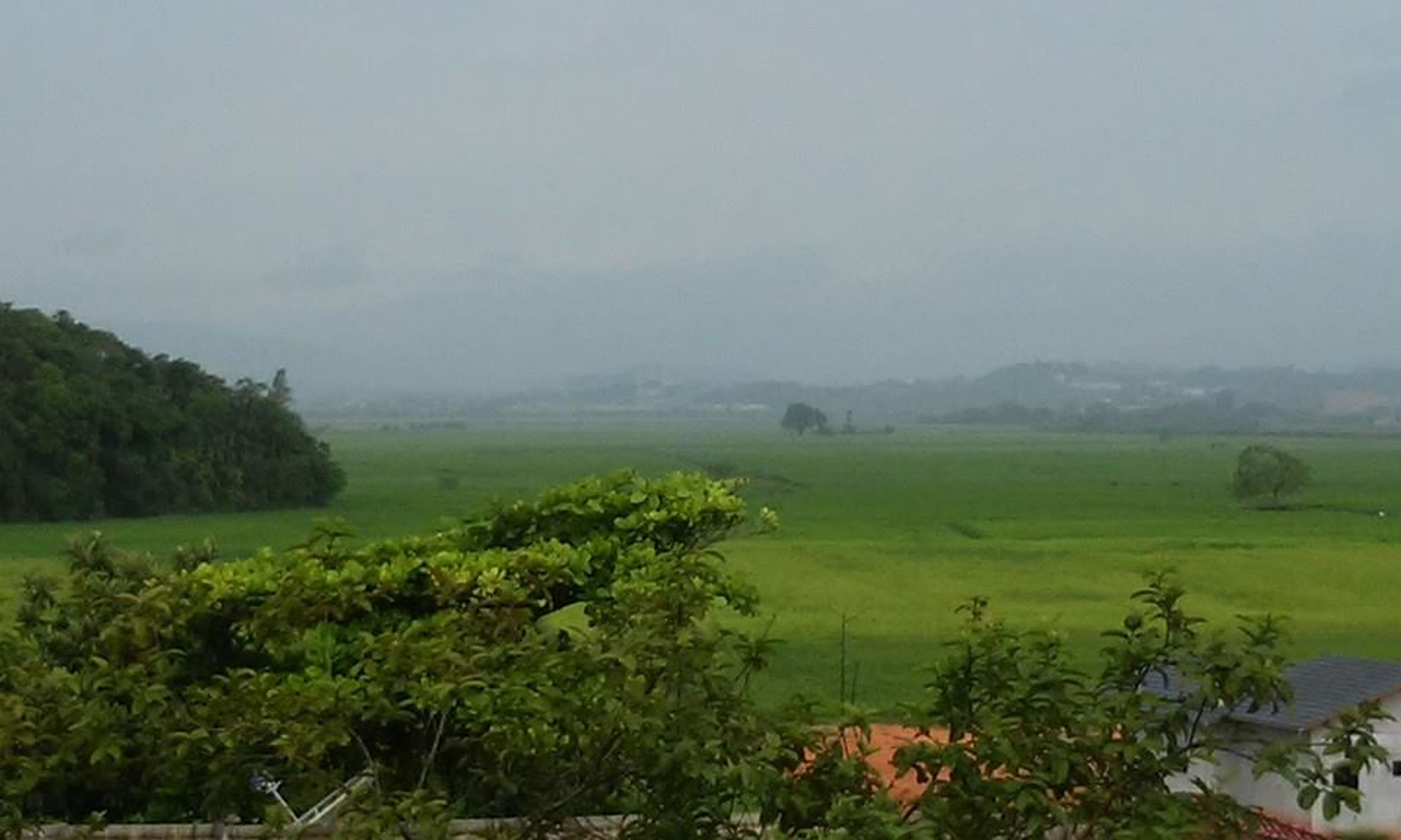 nature, tree, growth, beauty in nature, fog, landscape, sky, water, outdoors, scenics, no people, lush - description, day