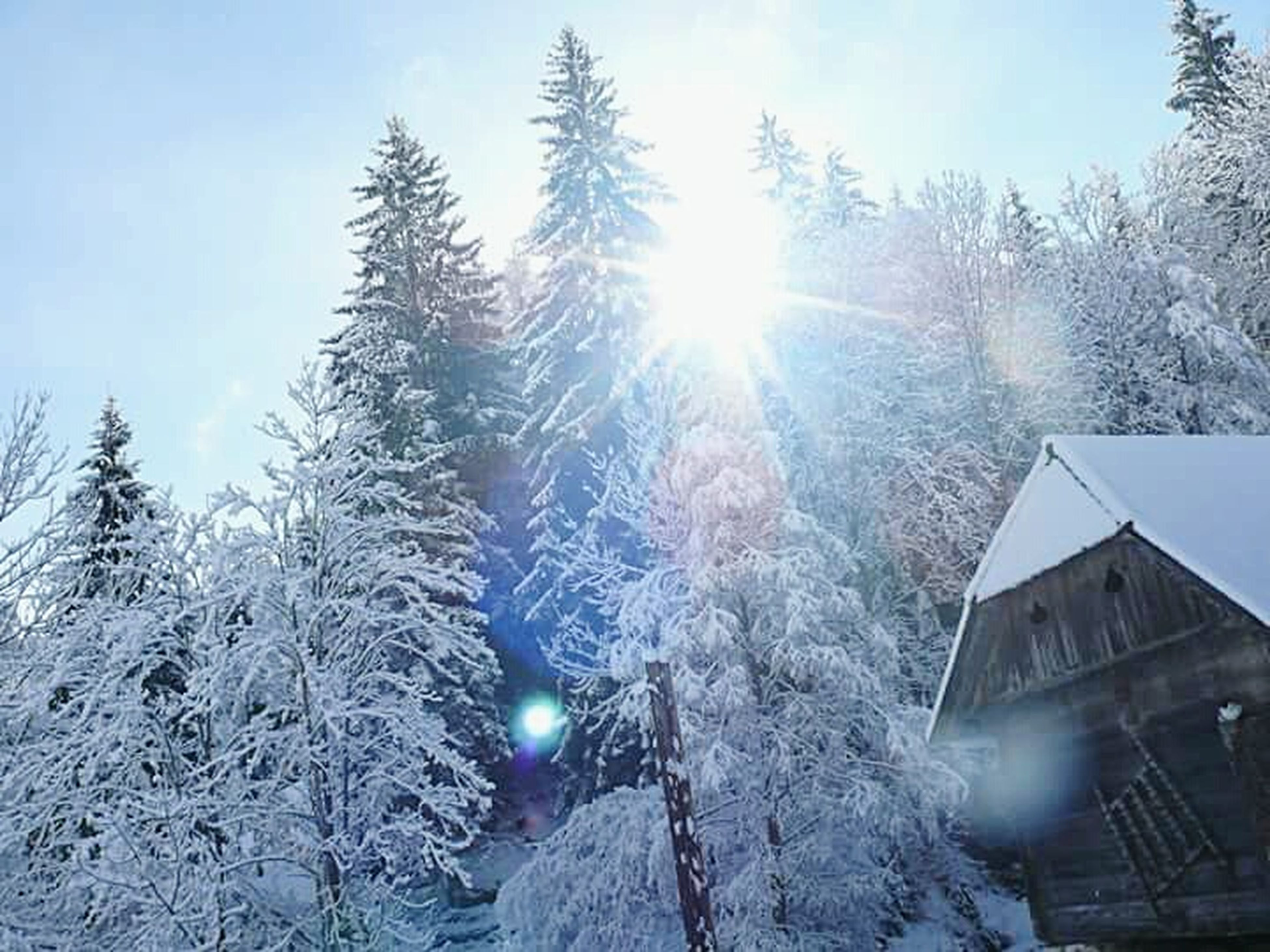 snow, winter, cold temperature, sun, sunbeam, sunlight, season, lens flare, tree, building exterior, weather, built structure, covering, architecture, bright, frozen, nature, low angle view, sky, sunny