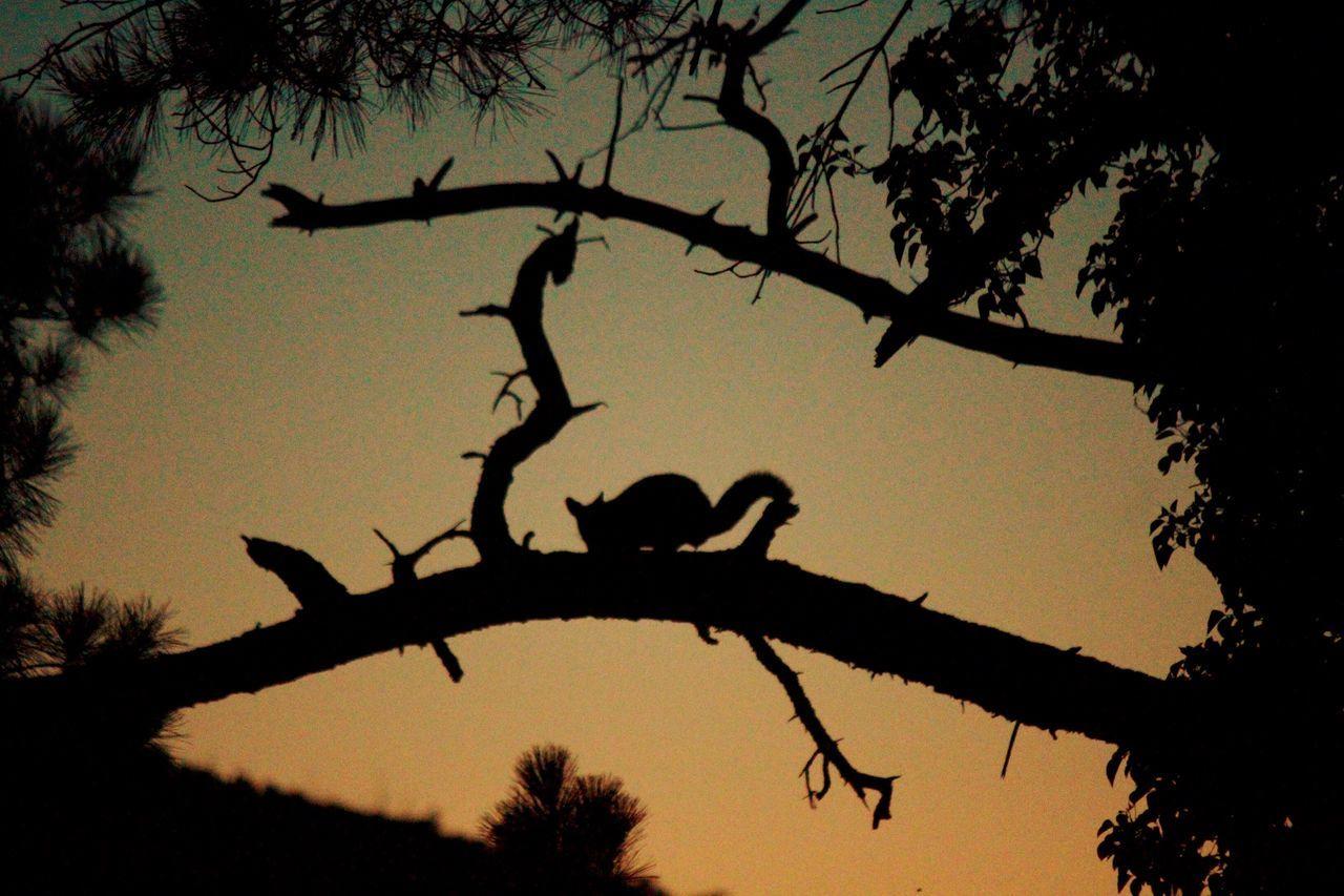 From the veranda. Yarra Valley Warburton Australian Wildlife Australia Nature Animal Wildlife Animals In The Wild Sunset Silhouette Tree Animal Themes Branch Nature Beauty In Nature Tranquil Scene