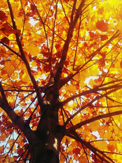 Autumn Autumn Colors Autumntree Autumncity Orange Color Tree Beauty In Nature Leaf Growth Milanocity Milanoisola
