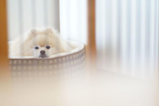 Oldlens Nofilter Pomeranian EyeEm Dog Lover Mylovelydog EyeEm Dogs