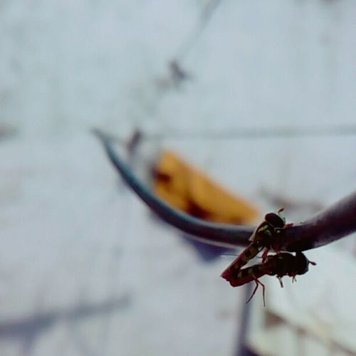 Spread Love, Make Love..!!❤📷❤ Outdoors Day Close-up Animal Themes No People Nature Photo Of The Day Focus Beauty In Nature Photography Is Life Photography PhonePhotography Nature Backyard Love Insects  Mating