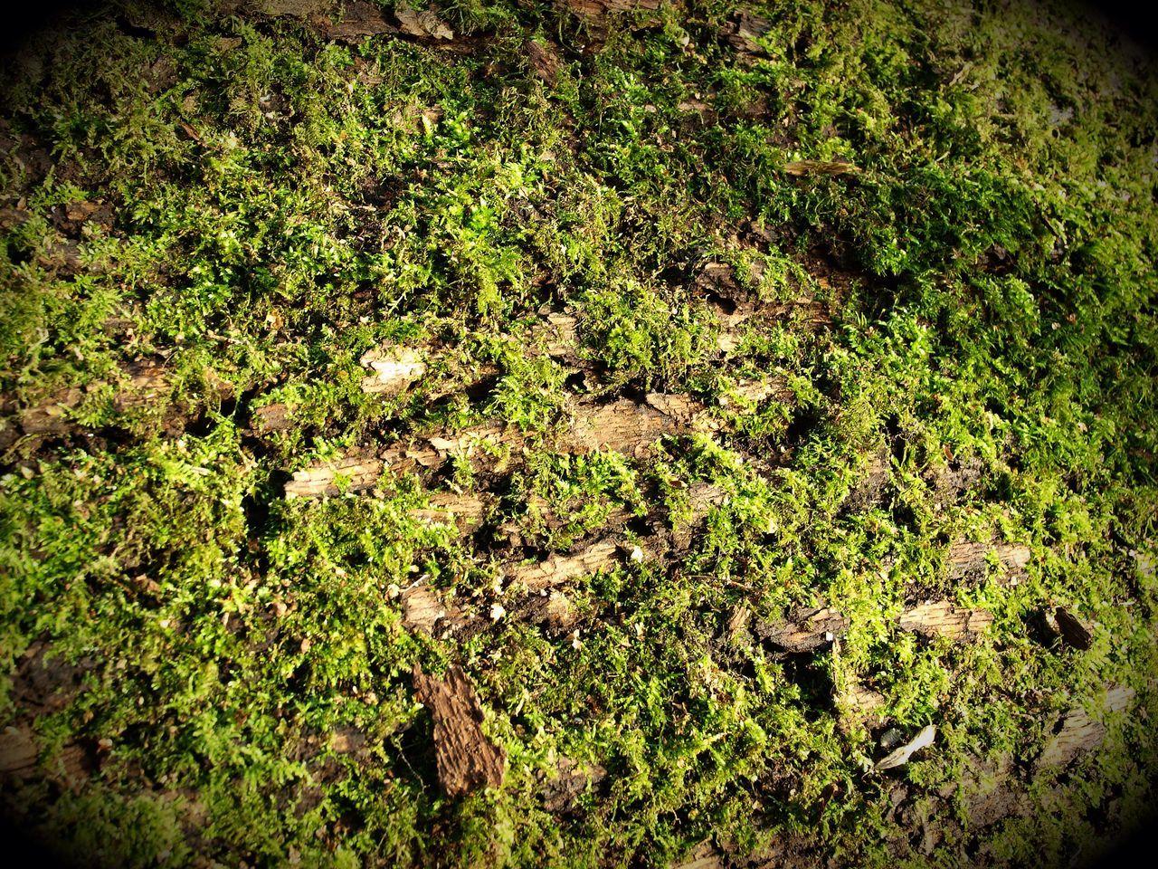 More moss Hampstead Heath Stevesevilempire Olympus London Green Color Nature Outdoors Zuiko Tree Trunk Steve Merrick