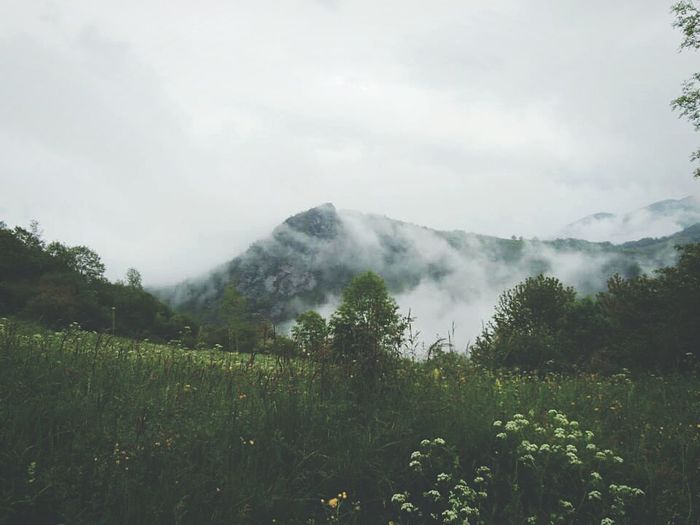 Misty Mountain Greens France S Qi Frame It! The Great Outdoors - 2016 EyeEm Awards Mist Mountains Landscape Nature Les Pyrenees Novice Photography