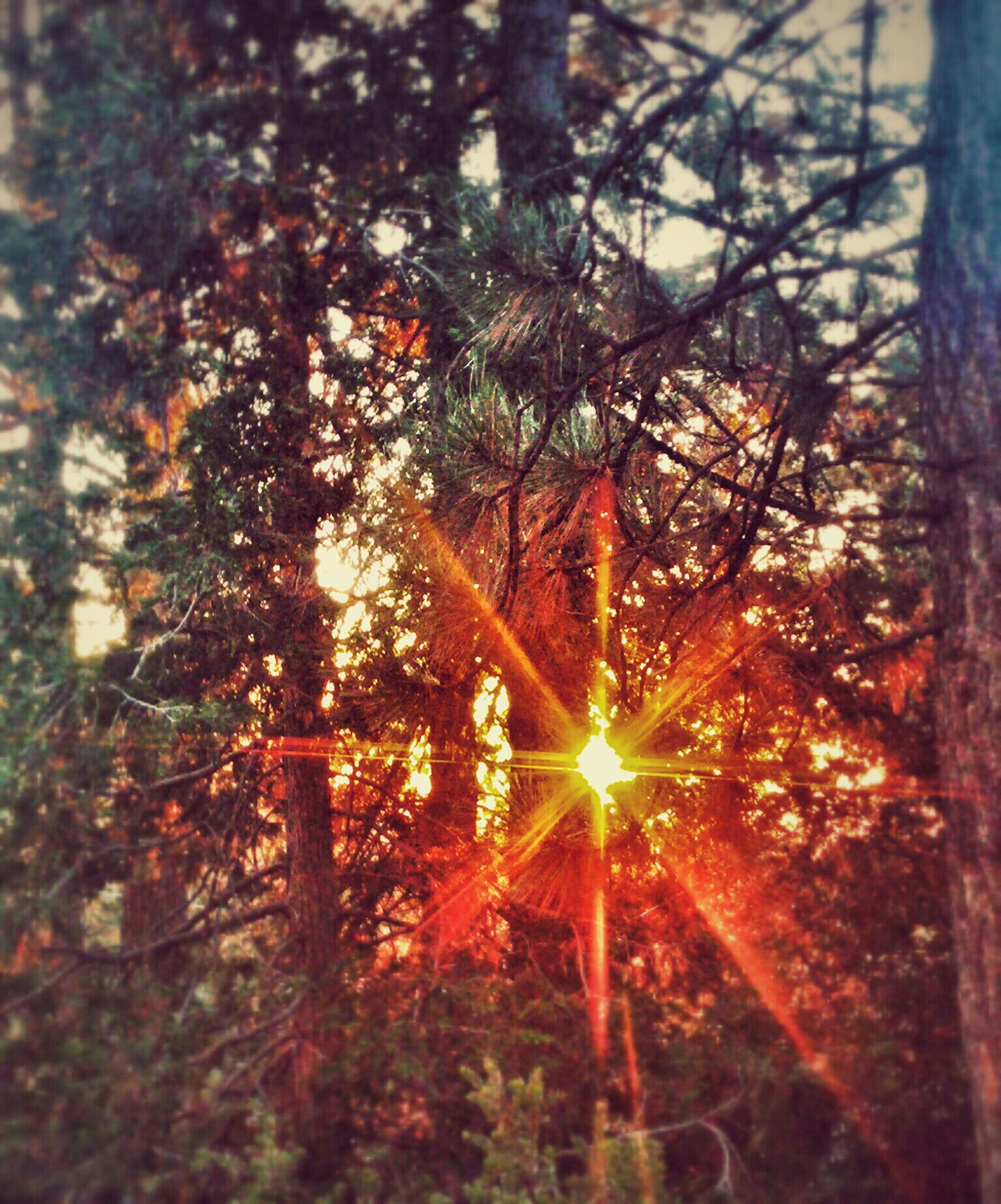 tree, forest, tree trunk, growth, nature, tranquility, sun, sunlight, branch, lens flare, low angle view, outdoors, sunbeam, woodland, glowing, no people, wood - material, beauty in nature, flame, back lit