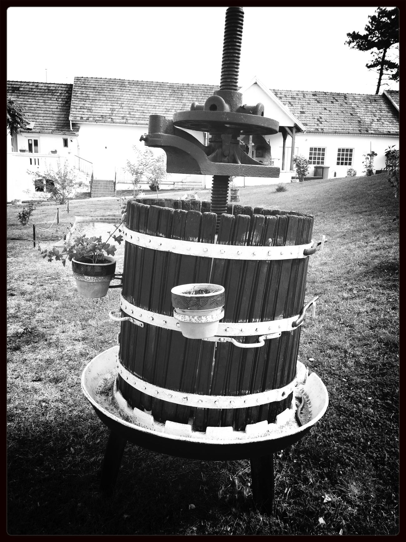 Wine Romania Black & White