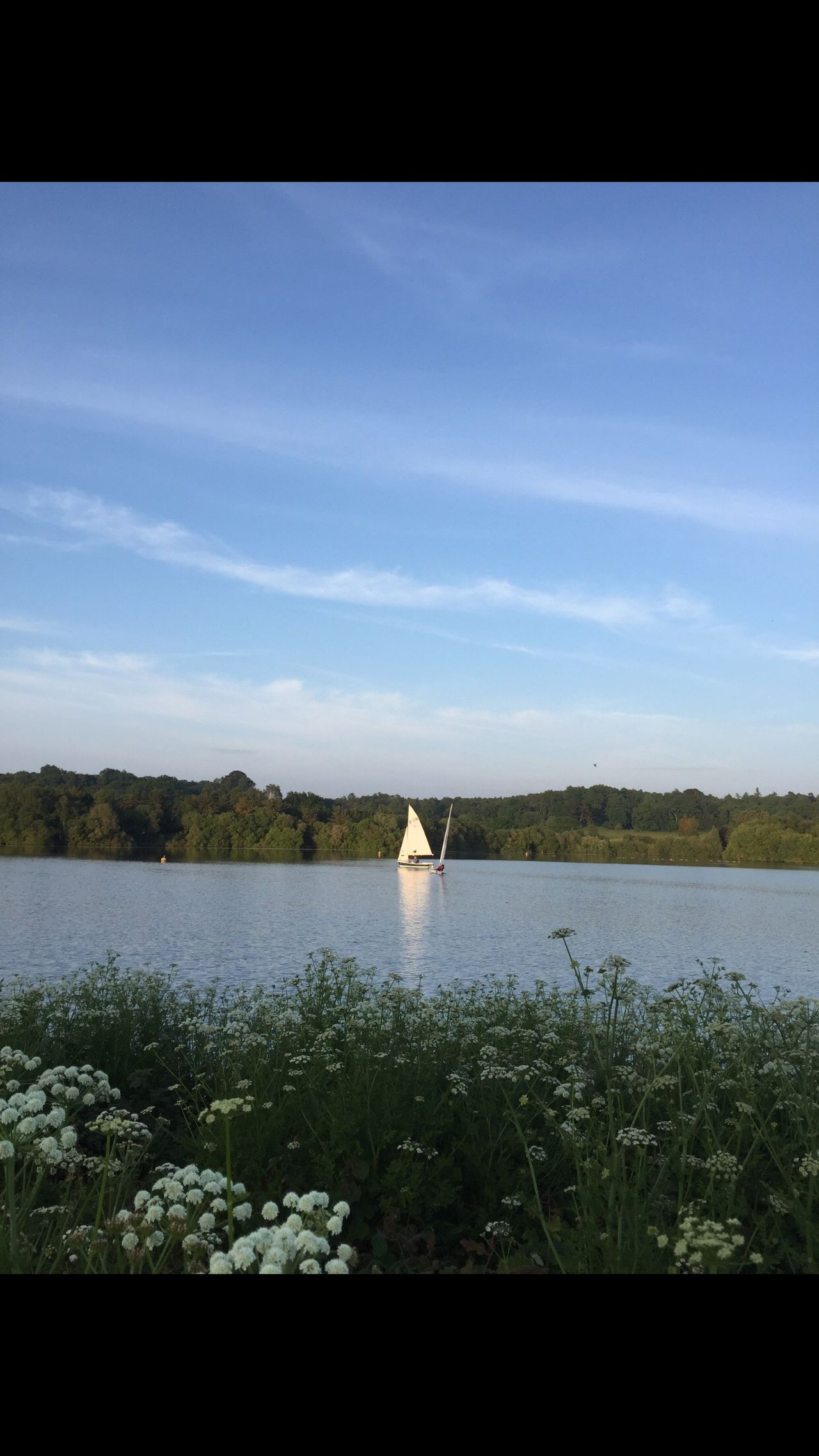 Found On The Roll Sailing Away Sailing Lake Lake View Pretty Weed Cow Parsley View Through Flowers No Edits No Filters Blashford Lakes Hampshire  Fine Art Photography