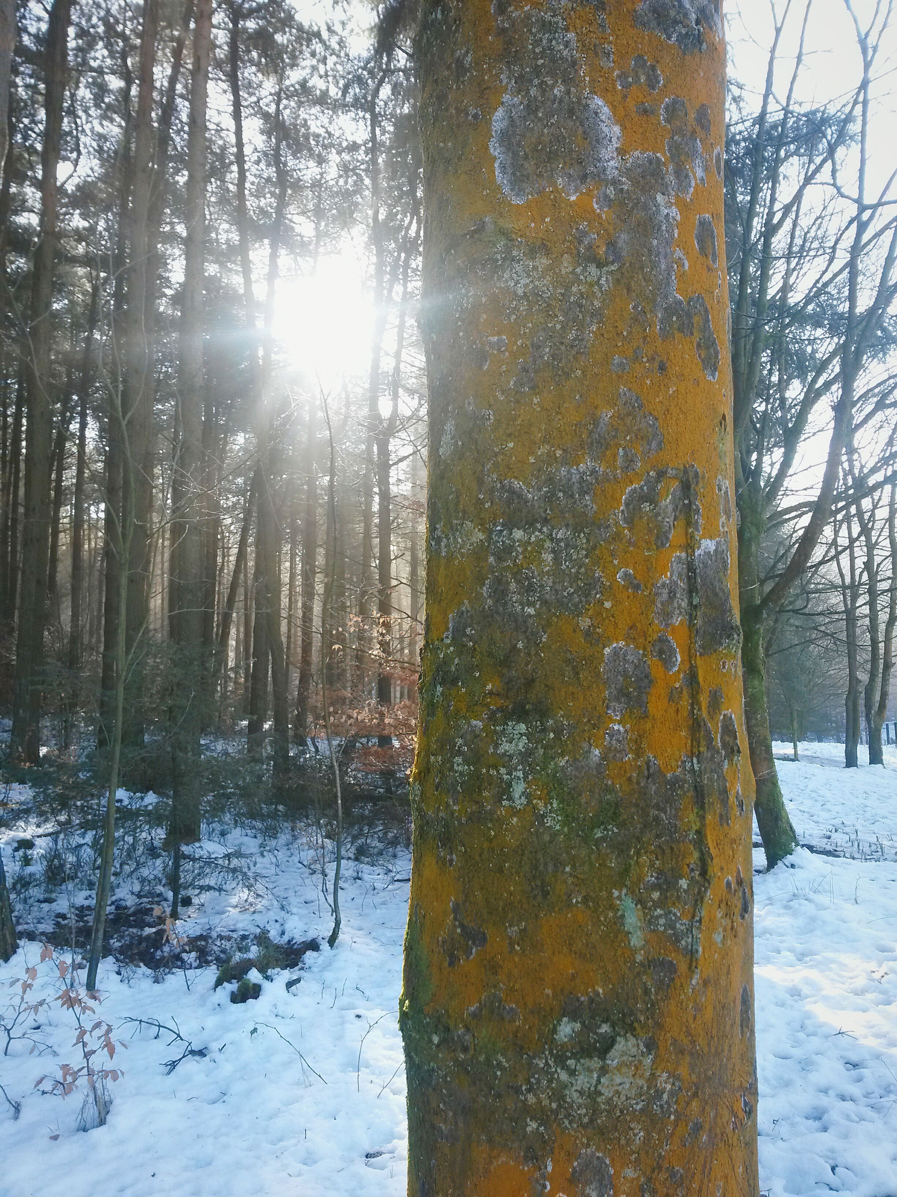 snow, winter, cold temperature, season, tree, sun, tree trunk, frozen, tranquility, sunlight, nature, weather, tranquil scene, covering, sky, beauty in nature, scenics, field, landscape, sunbeam