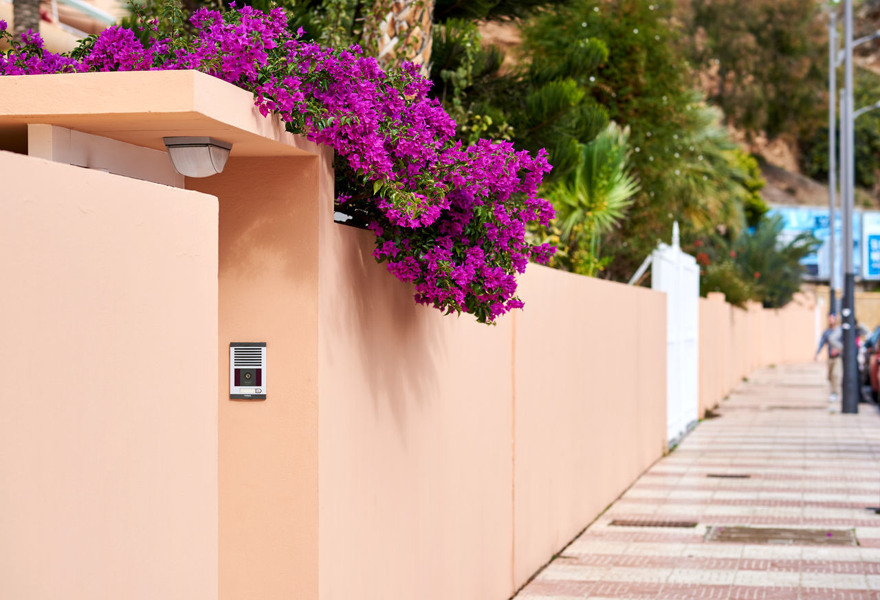 Typical spanish street with a blooming tree Beauty In Nature Blooming Trees Bright Colors Building Exterior Built Structure Bush Decorative Plants Europe Flower Nature Outdoors Outside Pedestrian Walkway Purple South SPAIN Spanish Spring Flowers Springtime Street Sunny Day Tropical Climate