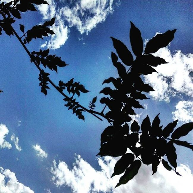 contrasto 🌿 Leaves Leaf Green Nature Naturelovers Lightandshadow Contrast Marche Italy Italia Liveloveitalia Igersmarche Igersitalia Blue Bluesky Cieloazzurro Sun Sunlight Sky Skylovers SkyClouds Clouds Cloudscape Landscape Wiko wikohighway contrasto