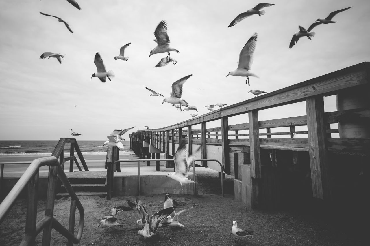 Animal Themes Animal Wildlife Animals In The Wild Beach Bird Black And White Blackandwhite Cold Day Flock Of Birds Flying Horizon Over Water Large Group Of Animals Monochrome Movement Nature No People Outdoors Pier Sand Sea Sky Travel Destinations Water Wide Angle