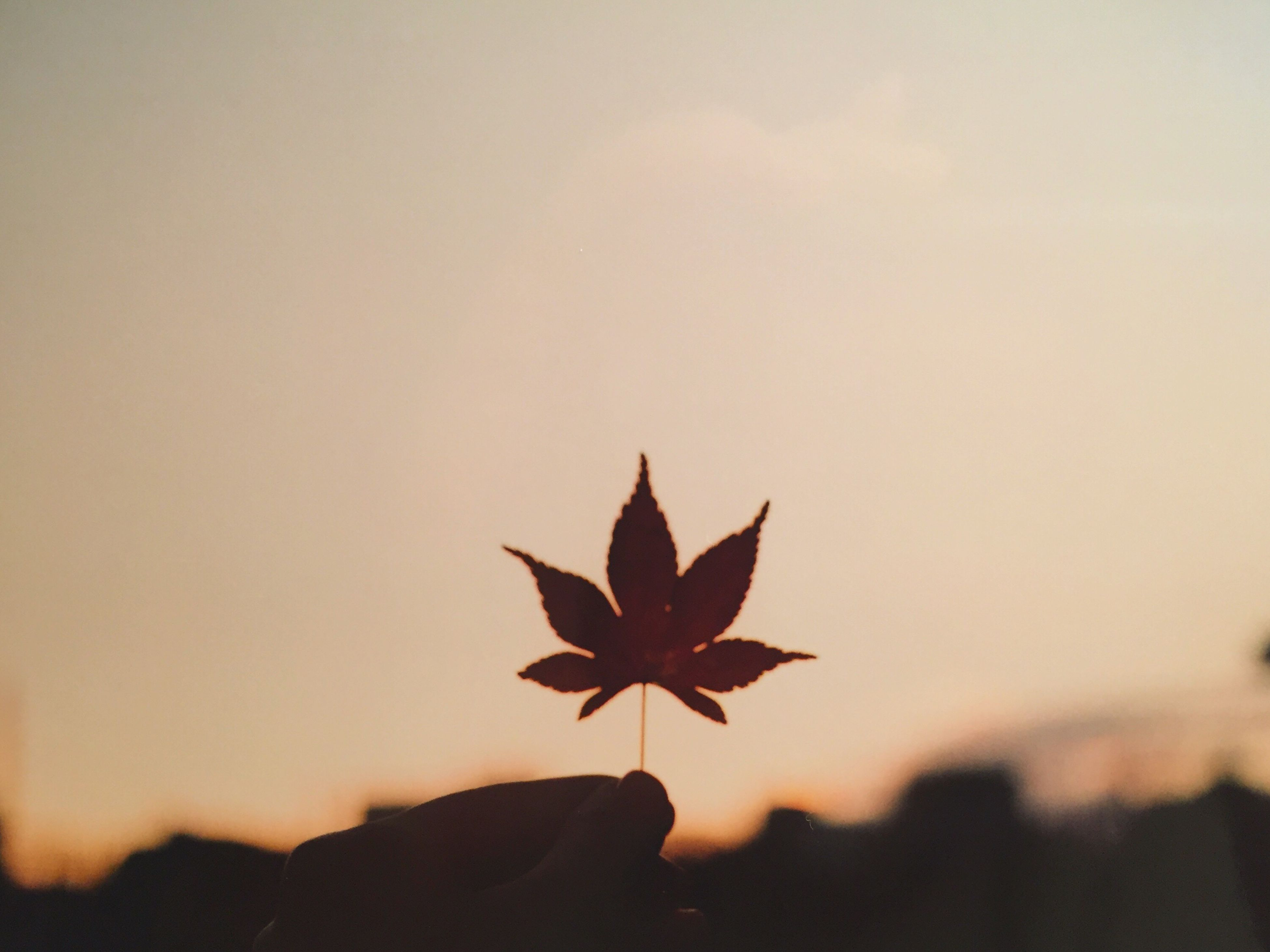 autumn, leaf, nature, focus on foreground, dry, silhouette, sunset, close-up, tranquility, change, beauty in nature, sky, clear sky, orange color, copy space, season, outdoors, maple leaf, tranquil scene, no people