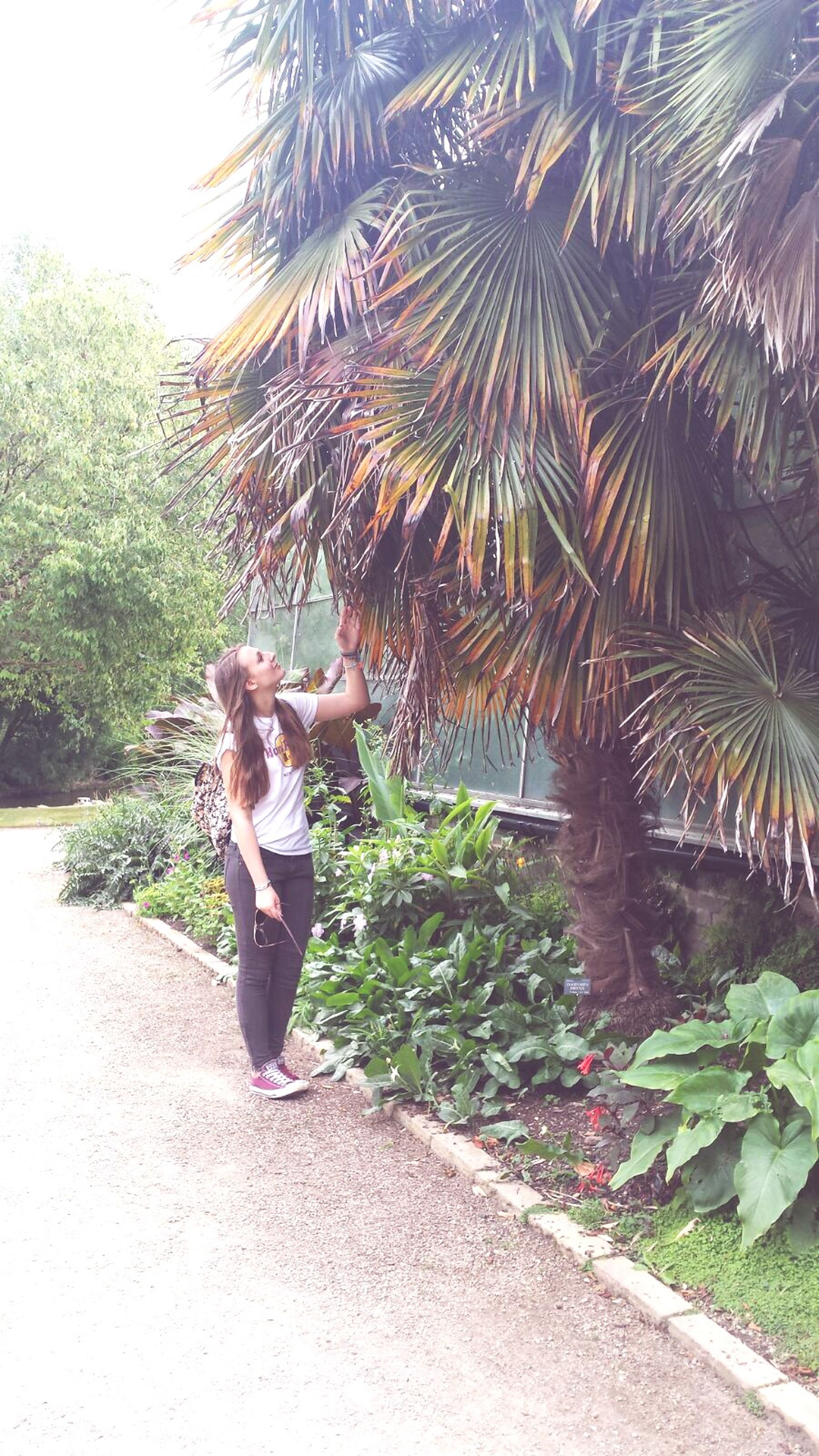 full length, lifestyles, tree, casual clothing, leisure activity, standing, plant, growth, rear view, walking, person, day, young adult, green color, palm tree, nature, sunlight, young women
