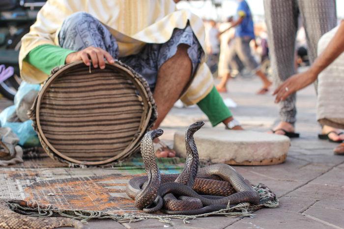Marroco Marakesh Travel Travel Photography Snakes Cobras People Photography
