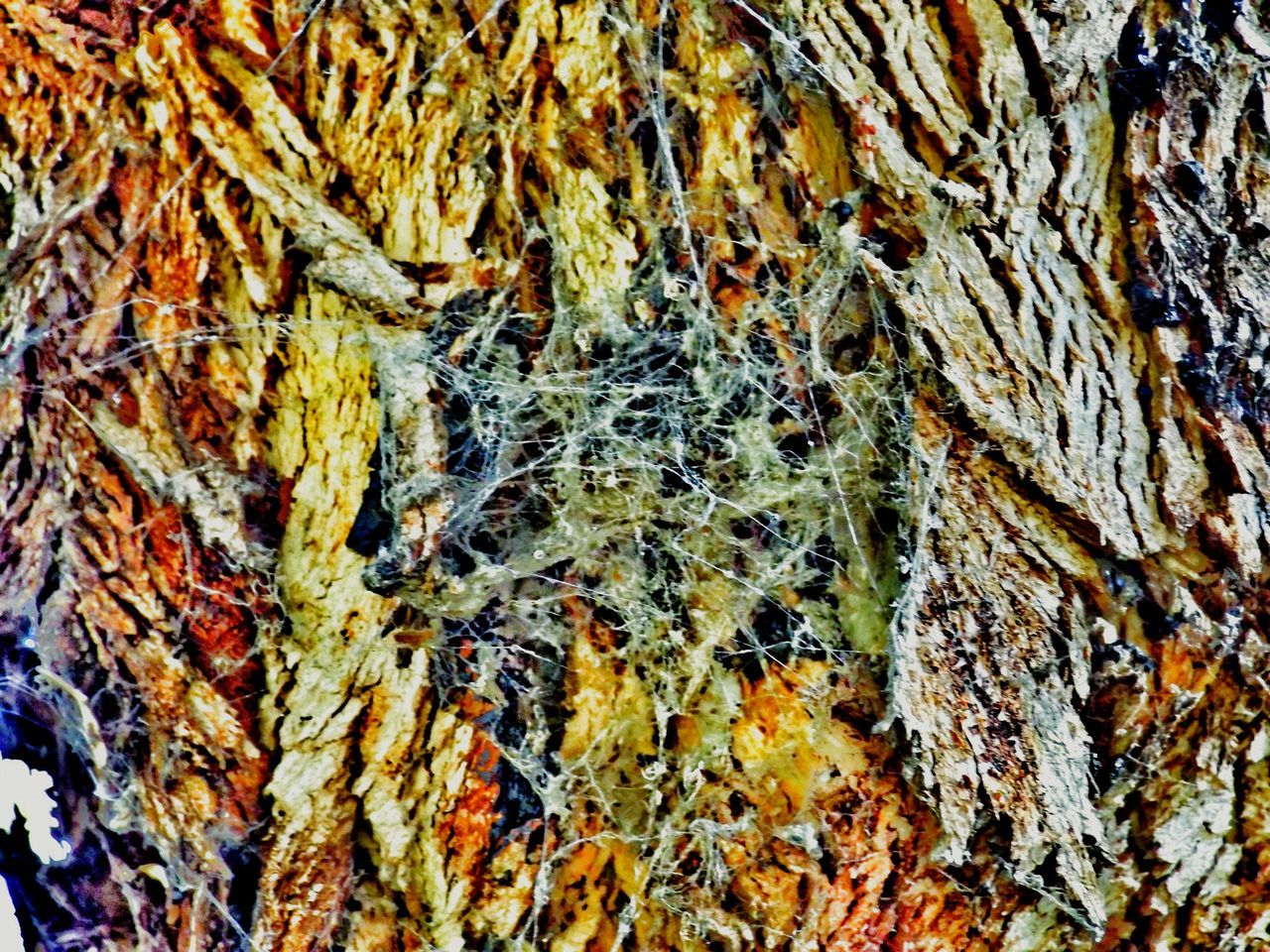 full frame, backgrounds, close-up, textured, pattern, rough, no people, multi colored, day, nature, indoors
