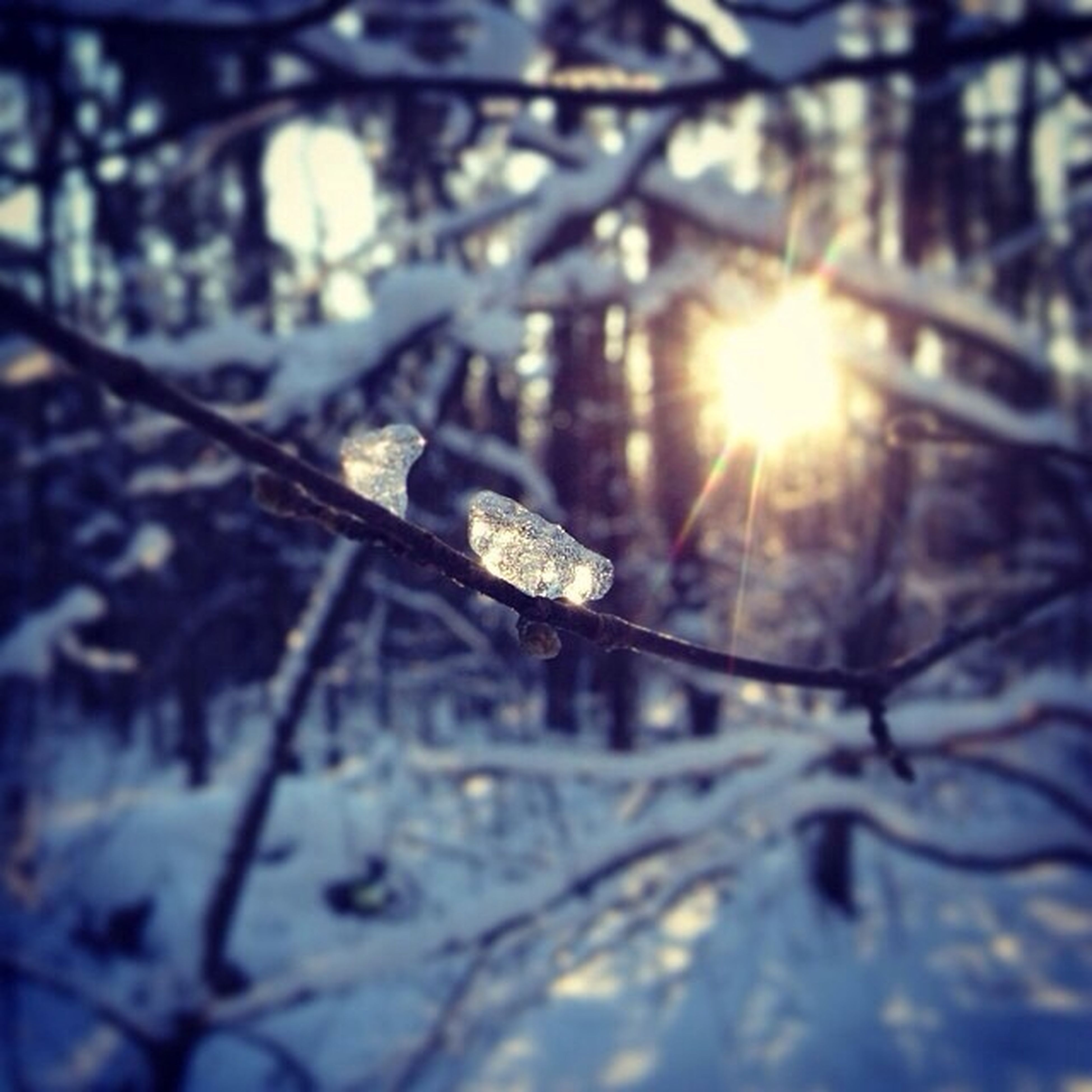 snow, cold temperature, winter, season, frozen, focus on foreground, nature, sun, close-up, sunlight, weather, covering, branch, tranquility, outdoors, beauty in nature, no people, lens flare, tree, white color