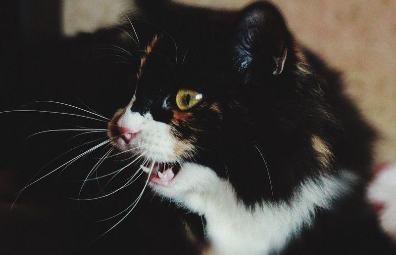 Моя кошка усы
