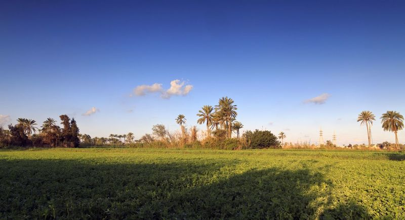 Egyptiqn farmers field Traveling Sunrise Morning Egypt Treavelling Landscape Sunshine Nature Enjoying Life Farm Greenfield Green Fields Green Nature Green Field Green Field Landscape Green Natural Greenfields Green Filed