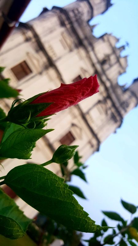 Building Exterior Architecture Outdoors Selective Focus Leaf Sky Flower Plant No People Low Angle View Day Red Close-up Built Structure City Nature Travel Destinations Church Religious Architecture