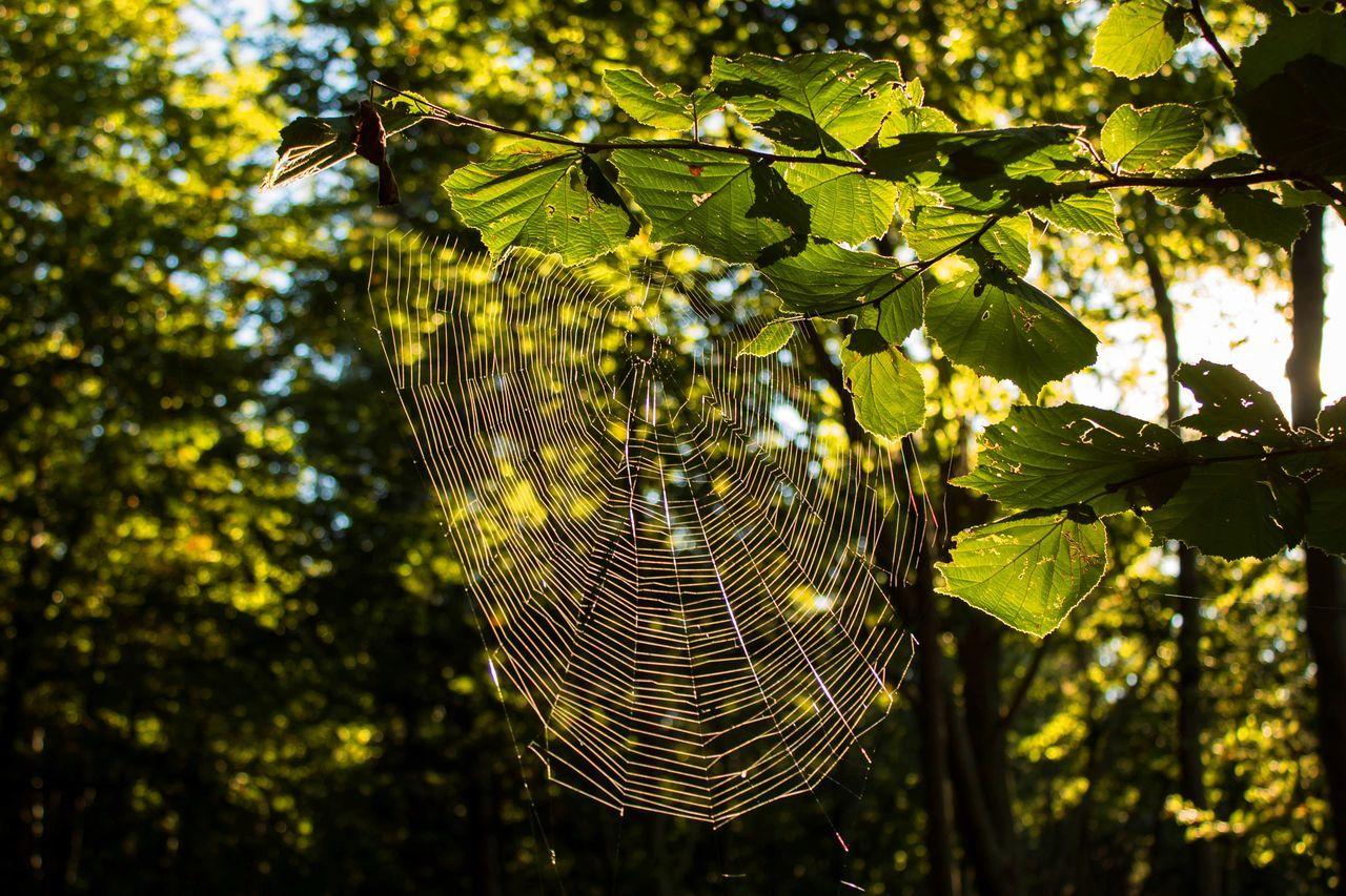 Spinnenenetz Herbststimmung