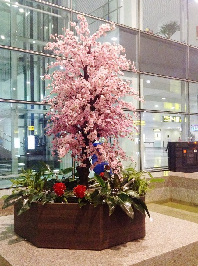 Blossom Noibaiinternationalairport