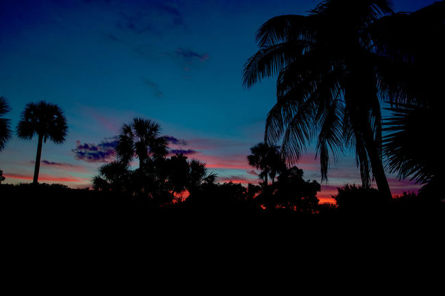 Atmosphere Atmospheric Mood Light Majestic Marcokleinphotography Outdoors Palm Tree Silhouette Summer Sunset