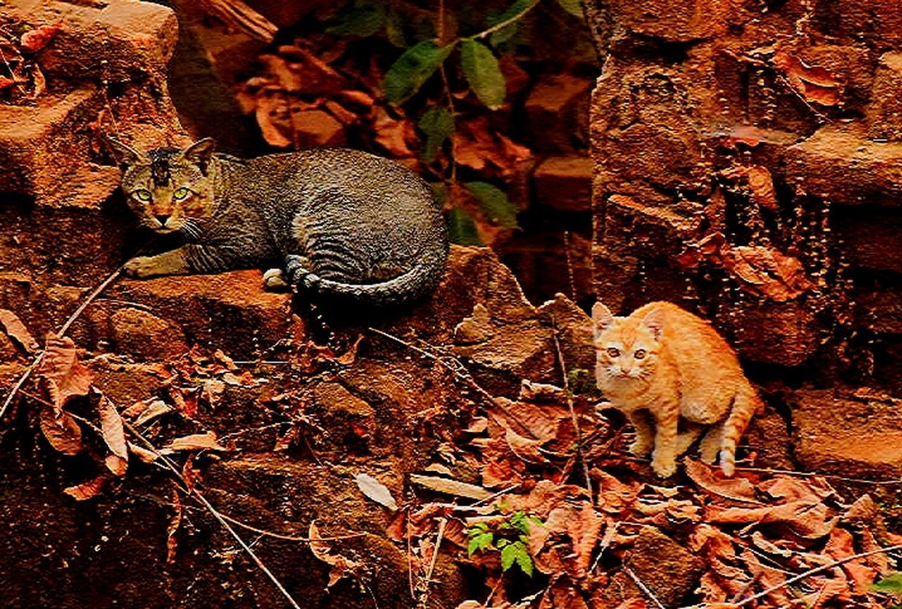 animals in the wild, animal wildlife, animal themes, nature, one animal, no people, mammal, outdoors, day, reptile