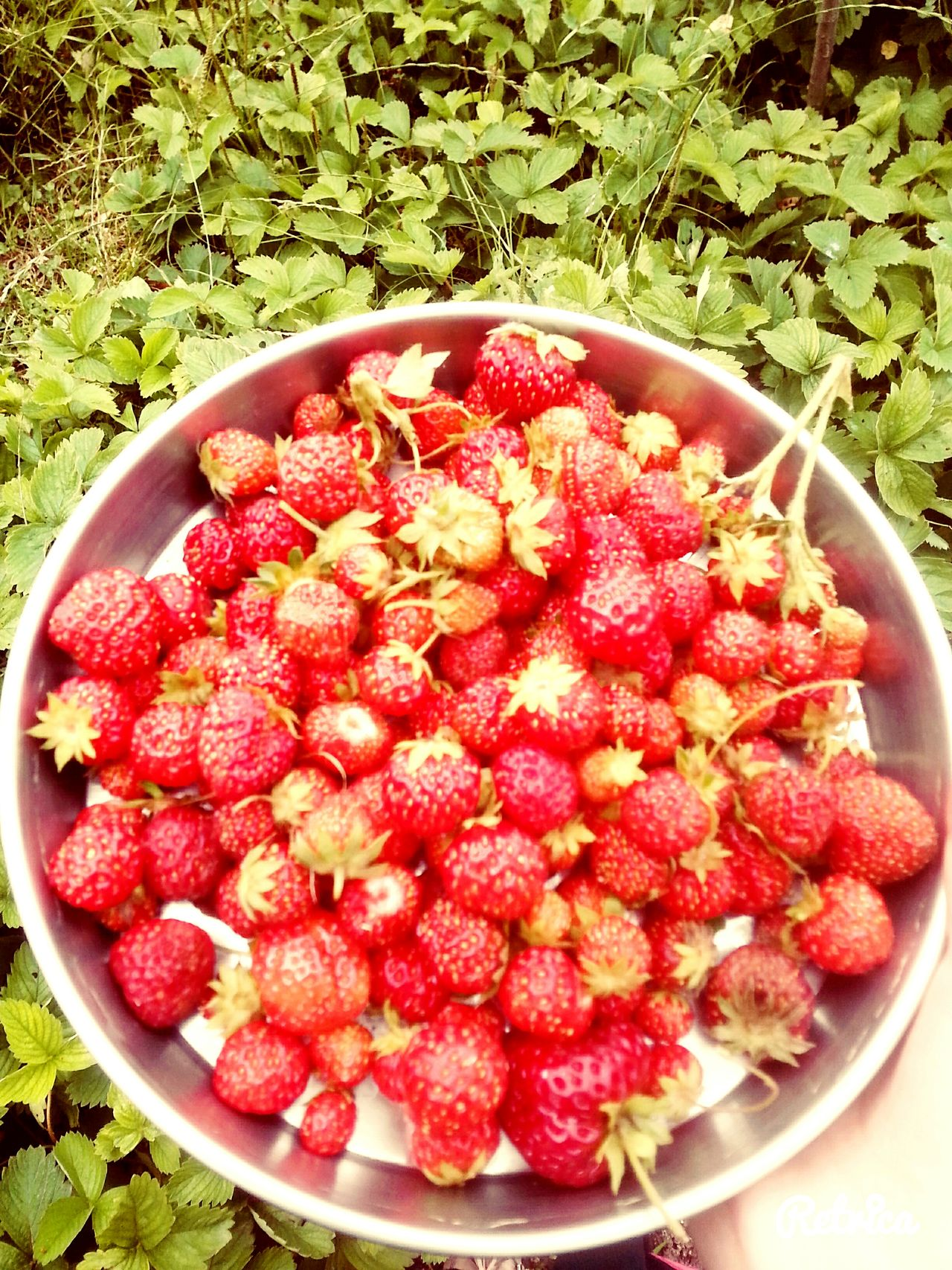 Hi! HelloEyeEm Helloworld Good Morning! Strawberry Strawberries Red ılgaz Taking Photos Sun