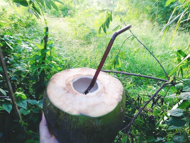 Coconut Plant Green Color Growth Outdoors Day Nature No People Tree Close-up Beauty In Nature Freshness