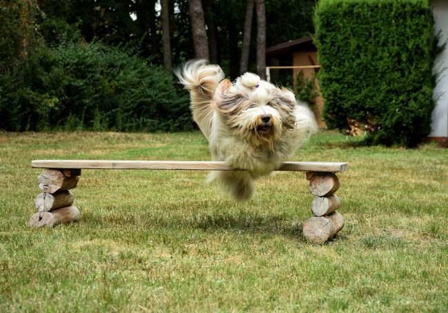Agility Animal Beardedcollie Beauty In Nature Day Dog DogLove Field Grass Grassy Green Green Color Growth Jump Landscape Lawn Mammal Nature No People Outdoors Park Relaxation Shaggydog Sport Tree