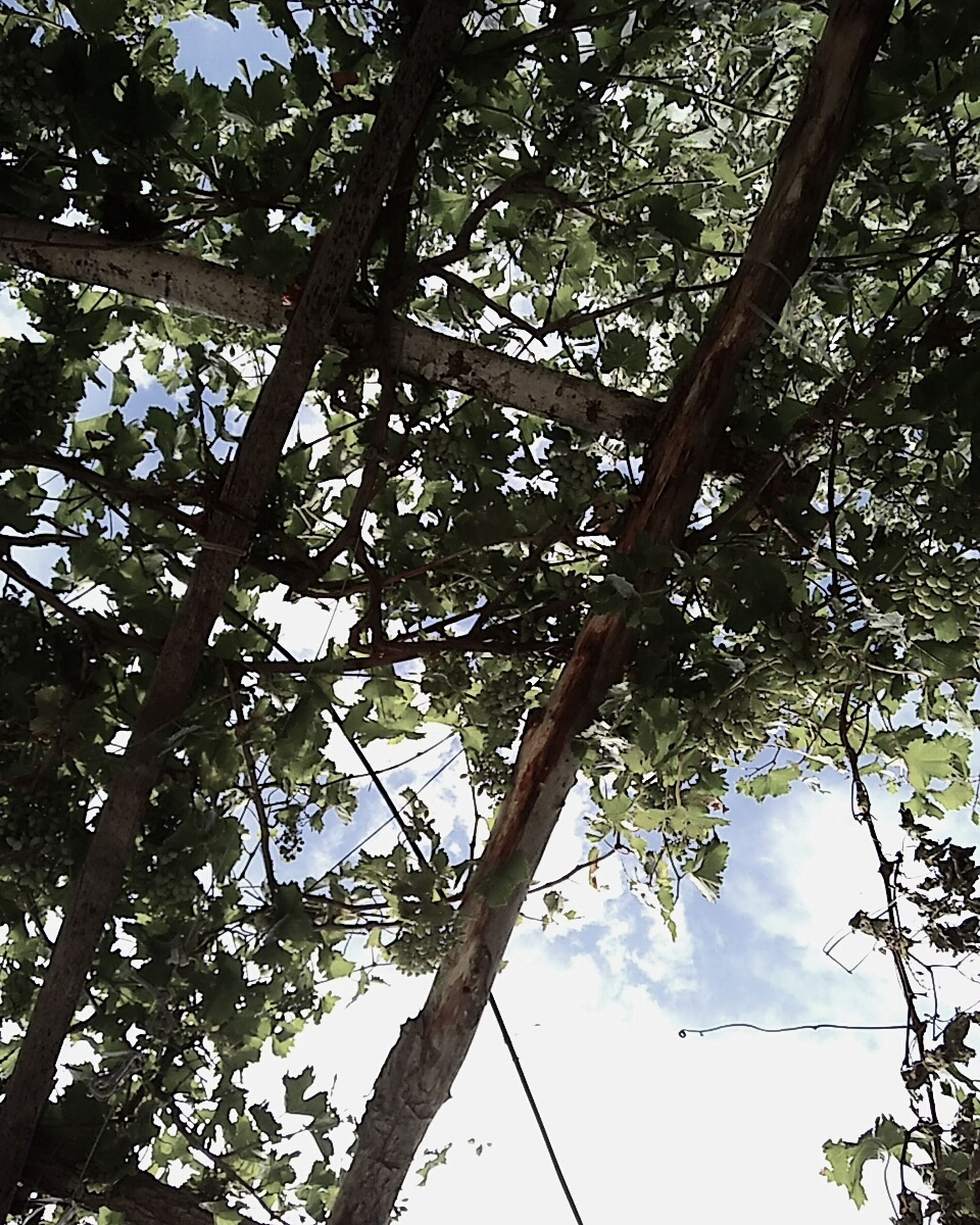 tree, low angle view, nature, growth, branch, no people, outdoors, sky, beauty in nature, day