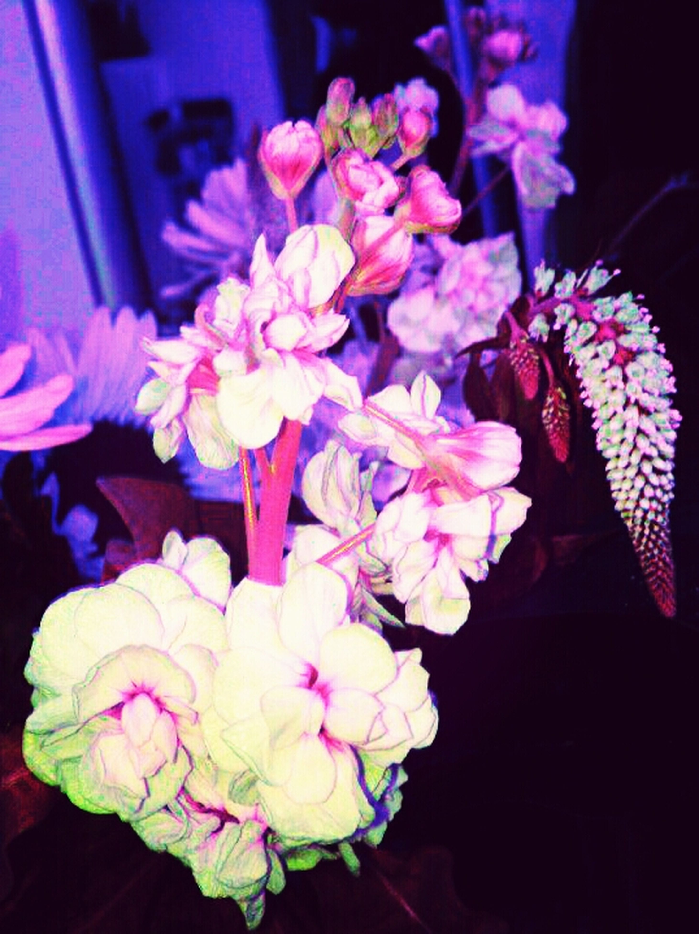 flower, indoors, petal, fragility, flower head, freshness, close-up, pink color, night, beauty in nature, growth, nature, purple, high angle view, bunch of flowers, blooming, plant, no people, black background, vase