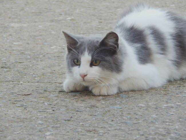 Domestic Animals Domestic Cat Pets Cat Animal Love Animals Animal Animal Themes Feline Cat Lovers Beautiful ♥ Nikonphotography Domestic Animal Cats 🐱 Nikon