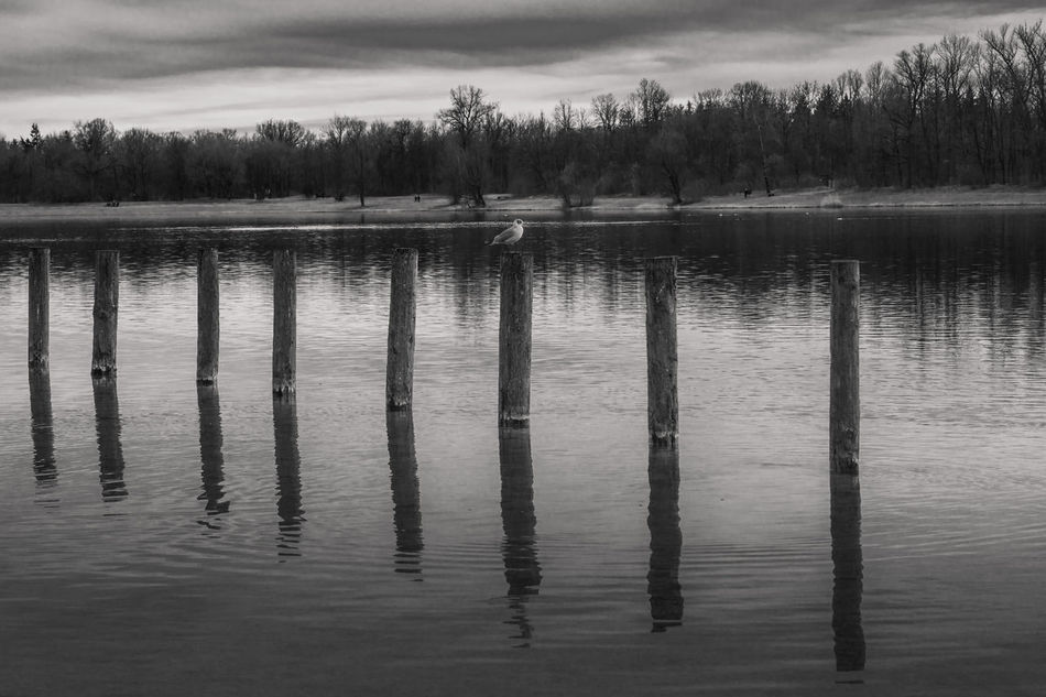 Atmospheric Mood Beauty In Nature Bird Blackandwhite Idyllic Lake Landscape Monochrome Nature No People Outdoors Reflection Scenics Seagull Sky Tranquil Scene Tranquility Trees Water Wooden Stakes