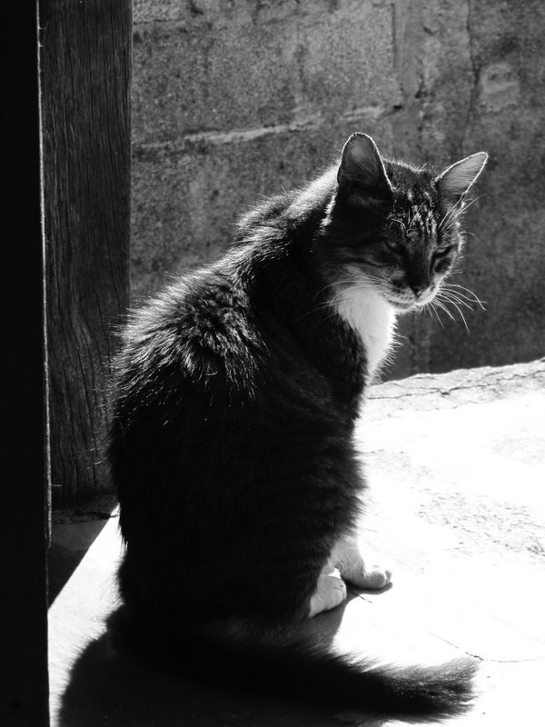Animal Animal Head  Animal Themes Black And White Blackandwhite Cat Cat Lovers Cats Cat♡ Curiosity Domestic Animals Domestic Cat Door Feline Feline Companions Kitten Kitty Looking Away Mammal Pet Photography  Pets Portrait Relaxation Whisker