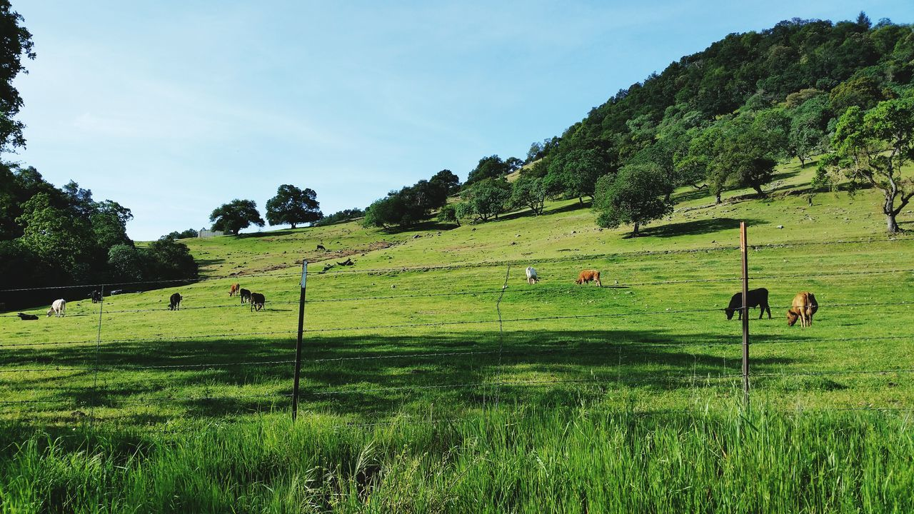 View Of Horses Grazing On Landscape