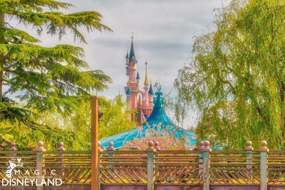 Tree Travel Destinations Architecture Celebration Disneylandparis Disneyland Resort Paris Amusement Park Disneyland Paris Disney Disneyland Tree 25thanniversary Multi Colored