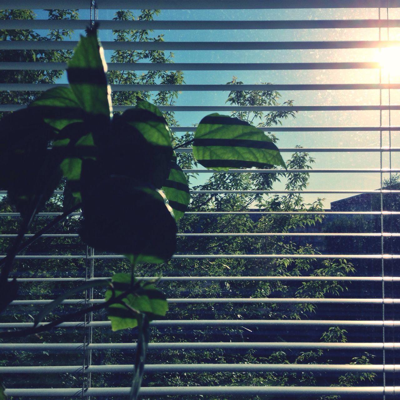 Windows 3.11 Windows Window Plants Roller Blind Lamellae Leipzig Home Sunset GDR Minimalism