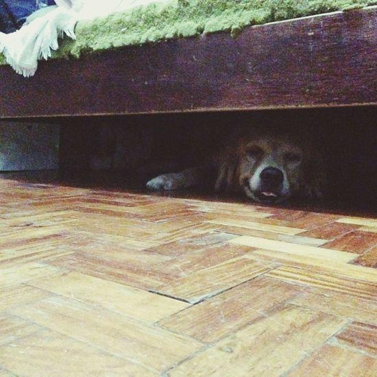 Found the hiding doggies. Fireworkophobia