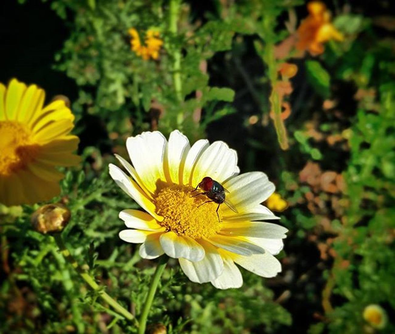 Showmeyourflowers Bee Nectar Flowers Valleys Kodai Green Fresh Colors Of Nature Cool Awesome Pleasant Sunset Sun Retro Nofilter Oneplus2 Onepluslife