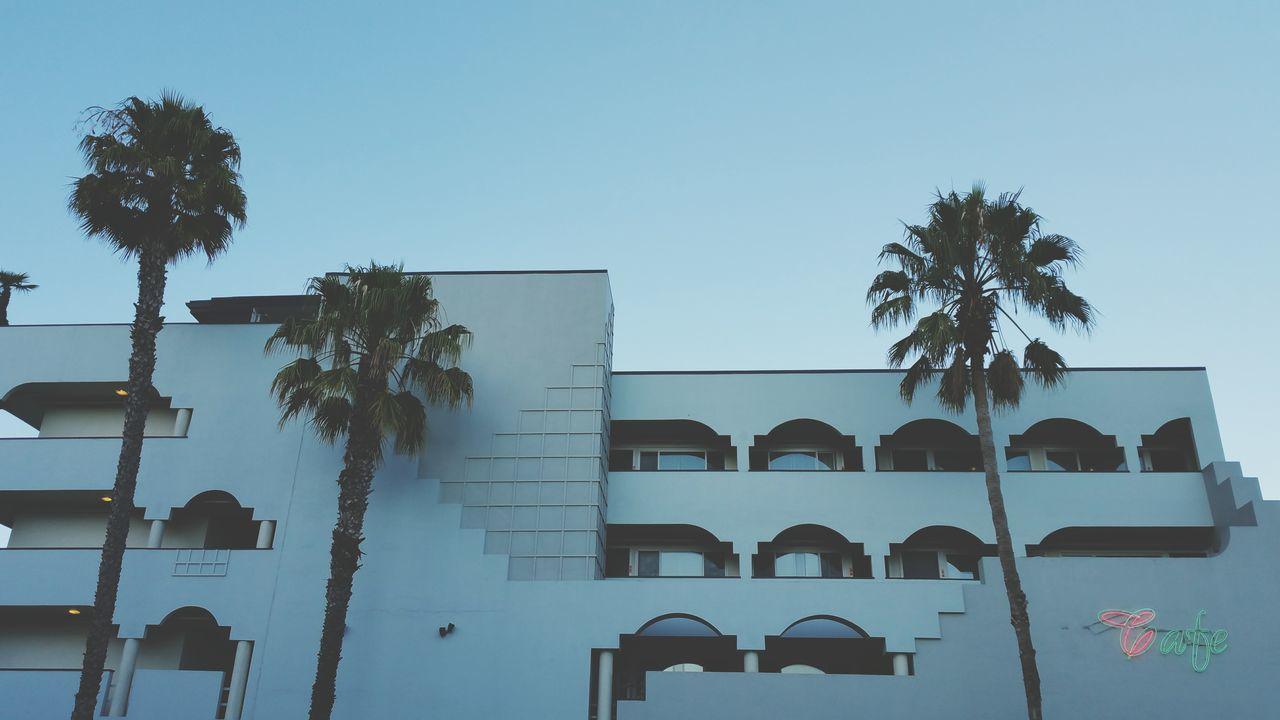San Francisco HotelCalifornia Palm Trees Tree And Sky Cafe Neon Sign Evening Glow Eyeem Photo
